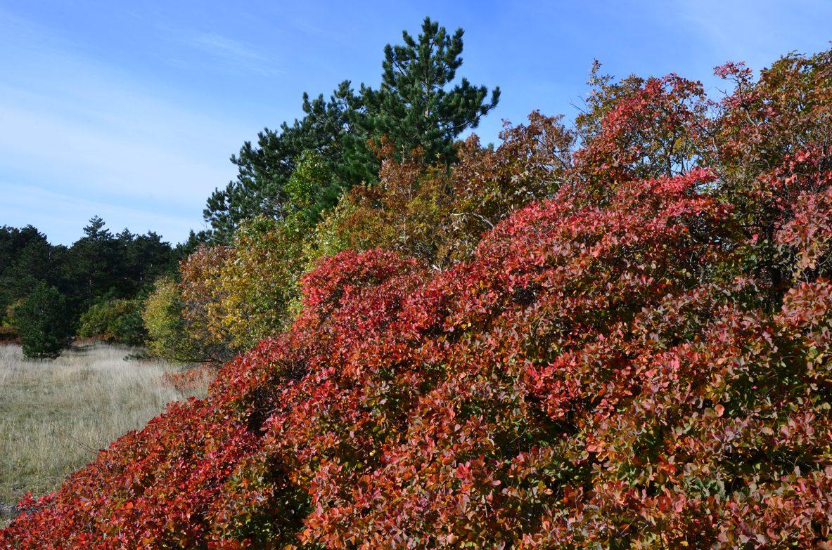 01 5379 colori autunno