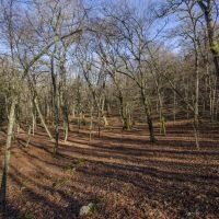 cescursioni -alberi-copia