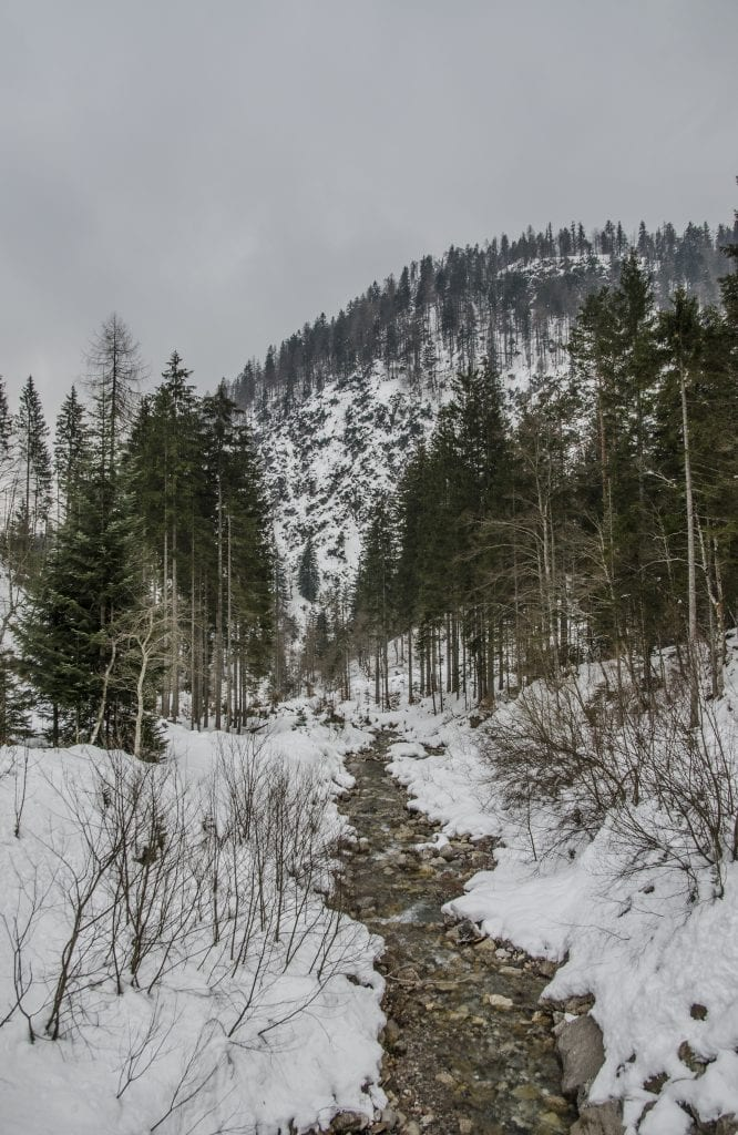 DSC_0301 panorama torrente alberi ok