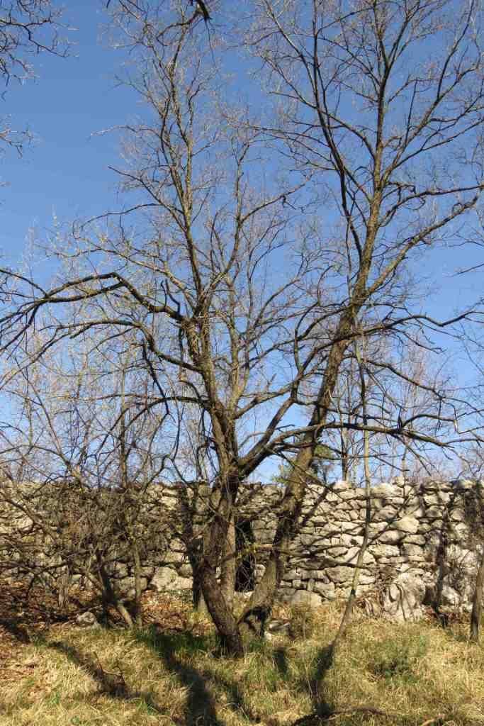 19-03-24 TAM Polli giro zona Borgo Gigante Caserme e Polveriera_149