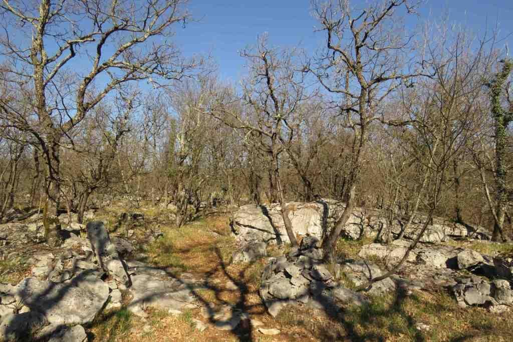 19-03-24 TAM Polli giro zona Borgo Gigante Caserme e Polveriera_202