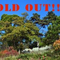 TAM alberi sold out web
