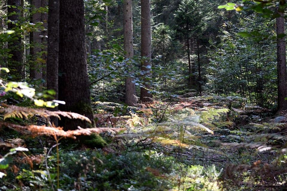 TAM bosco misto