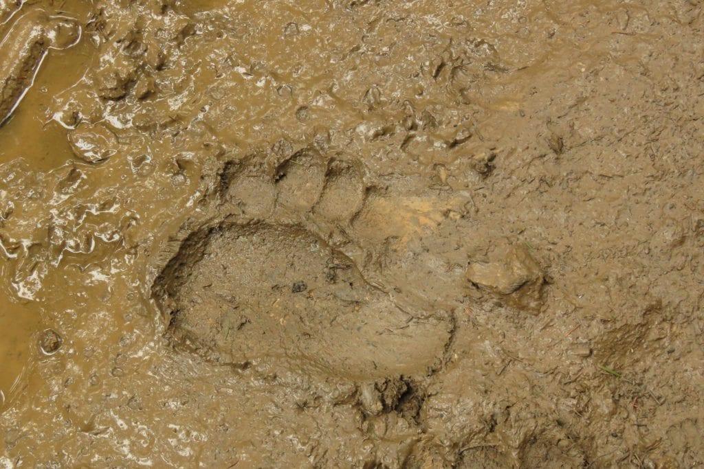 19-09-07 Castello Nevoso-Passo Obramec_impronta orso