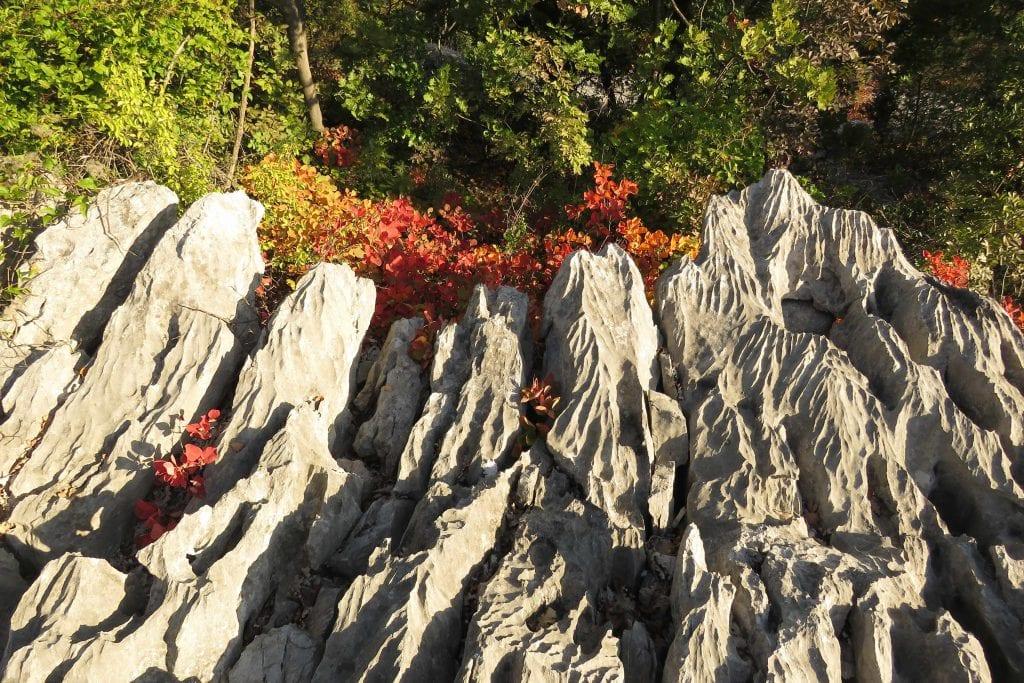 19-10-26 TAM 29 Corso alberi_01